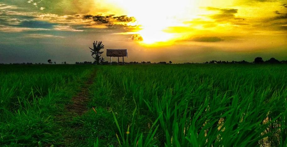 Desa Wisata Bondowoso