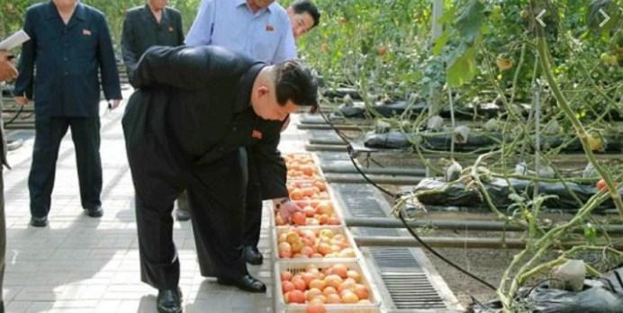Cara Kim Jong Un Mengatasi Krisis Pupuk