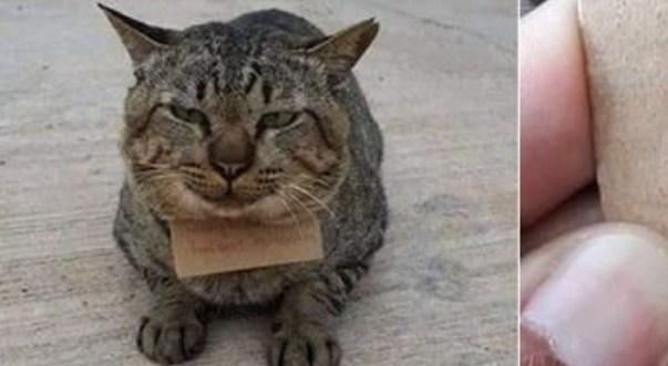 Kucing Hilang 3 Hari